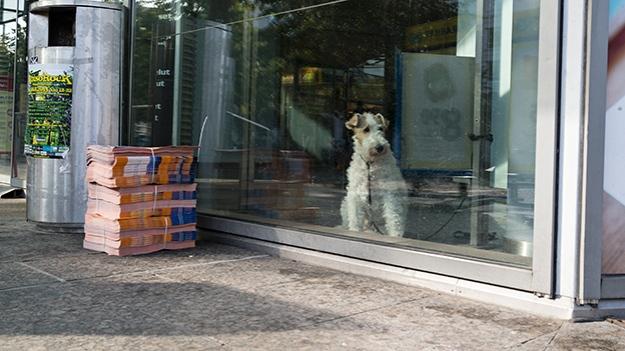 2014-09-21-waiting-dog-006
