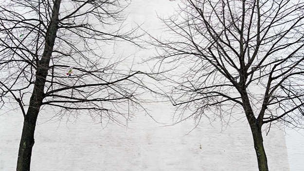 2014-12-11-trees-without-leaves-003