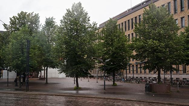 2015-07-30-wet-trees-035