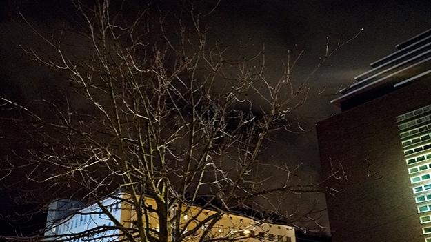 2016-02-02-lit-tree-025