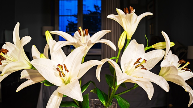 2016-08-07-lilies-part-two-010
